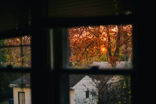 Fall leaves window